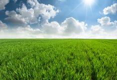 Piękny świeży trawy pole z niebieskim niebem Obrazy Royalty Free
