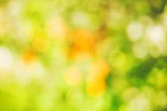 Piękny żółty bokeh, wiosny tło Zdjęcie Royalty Free
