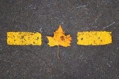 Piękny żółty drzewny liść obrazy stock