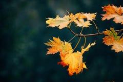 Piękny żółty drzewny liść zdjęcie royalty free