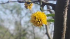 Piękny żółty kwiat gdzieś za drewnach w zdjęcia stock