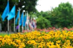 Piękny żółty kwiatu pole Zdjęcia Royalty Free
