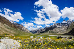 Piękny żółty kwiatu pole z niebieskim niebem Obrazy Stock