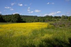 Piękny żółty paśnik zdjęcia stock