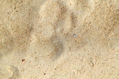 Piękny żółty piasek Obraz Royalty Free
