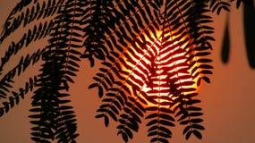 Piękny Żółty słońce za liśćmi zdjęcie royalty free