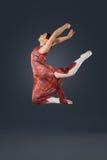 Piękny żeński baletniczy tancerz na popielatym tle Fotografia Stock