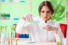 Piękny żeński biotechnologia naukowa chemik pracuje w lab zdjęcie royalty free