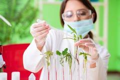 Piękny żeński biotechnologia naukowa chemik pracuje w lab fotografia stock