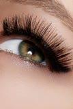 Piękny żeński oko z ekstremum długimi rzęsami, czarny liniowa makeup Perfect makijaż, tęsk baty Zbliżenie mody oczy Zdjęcia Royalty Free
