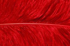 Piękny abstrakcjonistyczny tła składać się z różowy gwinei ptactwo upierza Zdjęcia Stock