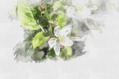 Piękny akwarela kwiat ilustracyjna wiosna royalty ilustracja