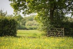 Piękny Angielski wieś krajobrazu wizerunek łąka w Sprin fotografia royalty free