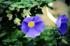 Piękny błękit Obrazy Royalty Free