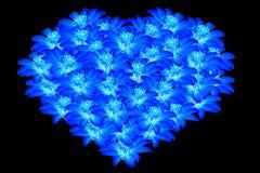 Piękny błękit kwitnie sercowaci 2 Obraz Royalty Free