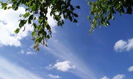 Piękny błękitny opustoszały niebo i puszyste chmury fotografia stock