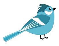 Piękny błękitny wróbel Zdjęcie Stock