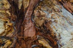 Piękny barwiony sedno drzewny popiół w cięciu, zbliżenie ilustracji