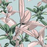 Piękny bezszwowy wektorowy kwiecisty wzór, wiosny lata tło z tropikalnym ficus, dżungla liść Egzotyczna botaniczna tapeta ilustracji