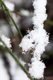 Piękny biały śnieg Zdjęcia Royalty Free