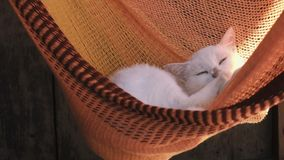 Piękny biały kot relaksuje w słońcu w czerwonym hamaku zbiory