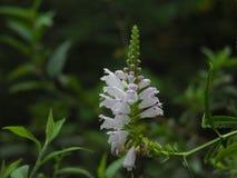 Piękny Biały kwiat zdjęcie stock