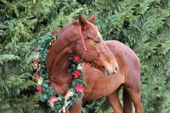 Piękny boże narodzenie wizerunek cisawy siodłowy koń jest ubranym w zdjęcia royalty free