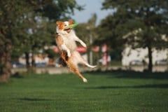 Piękny Border collie pies bawić się outdoors fotografia royalty free