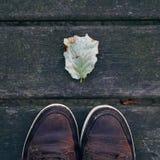Piękny brązu drzewa liść zdjęcie stock