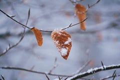 Piękny brązu drzewa liść zdjęcie royalty free