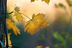 Piękny brązu drzewa liść obraz stock