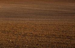 Piękny brązu wzór na polu w wiośnie Abstrakt, textured tło obrazy royalty free