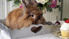 Piękny brown królik zbiory wideo