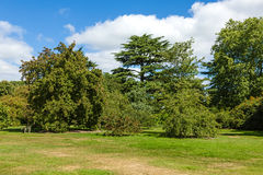 Piękny bujny zieleni lasu ogród zdjęcie royalty free