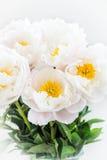 Piękny bukiet białe Chińskie peonie Fotografia Royalty Free