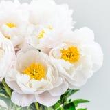 Piękny bukiet białe Chińskie peonie Obraz Stock