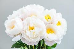 Piękny bukiet białe Chińskie peonie Zdjęcie Royalty Free