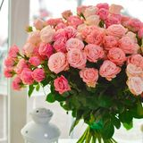 Piękny bukiet menchii róży krzaki przy okno fotografia stock