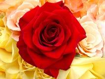 Piękny bukiet róże. Obraz Stock