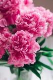 Piękny bukiet różowe peonie banner tła kwiaty form różowego spiralę trochę Fotografia Royalty Free