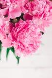 Piękny bukiet różowe peonie banner tła kwiaty form różowego spiralę trochę Zdjęcia Stock