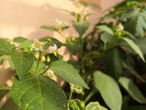 Piękny Chłodny kwiat zdjęcia stock