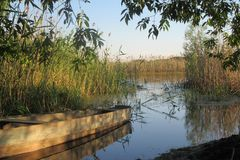 Piękny ciepły letni dzień blisko jeziora Fotografia Stock