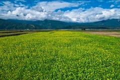 piękny cloudscape pola kwiatu gwałt Zdjęcia Stock