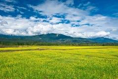 piękny cloudscape pola kwiatu gwałt Fotografia Stock