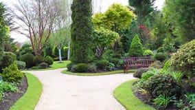 Piękny conifer ogród, materiał filmowy zbiory wideo