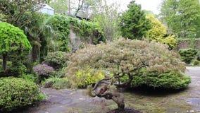 Piękny conifer ogród, materiał filmowy zdjęcie wideo
