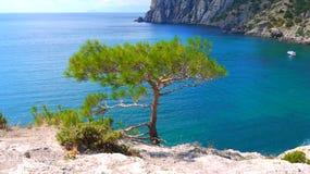 piękny Crimea jeden umieszcza Ukraine Rezerwuje Nowego światło Fotografia Stock