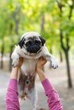 Piękny cutie pies w istoty ludzkiej ręce outdoors Zwierzęcia domowego pojęcie Obrazy Royalty Free