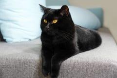 Piękny czarny kot kłama Zdjęcie Stock